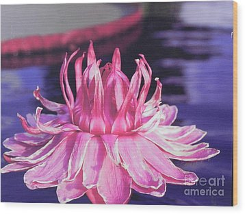 Wood Print featuring the photograph Beauty Of Pink At The Ny Botanical Gardens by Chrisann Ellis