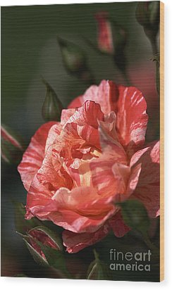 Wood Print featuring the photograph Beauty Of Rose by Joy Watson