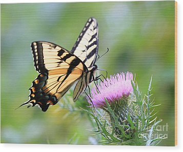 Beauty On Wings Wood Print by Geoff Crego