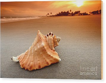 Beauty Shell Wood Print by Boon Mee