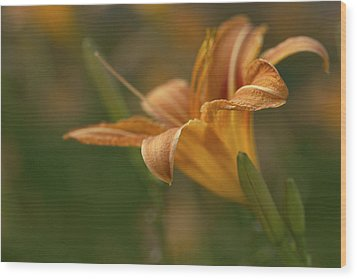 Beauty - Tiger Lily Art Print Wood Print