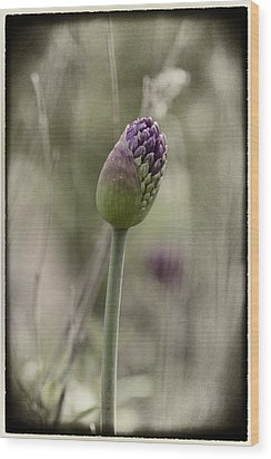 Wood Print featuring the photograph Beauty Unfurls Its Arms.. by Russell Styles