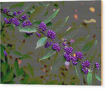 Beautyberry Wood Print by Frank Tozier