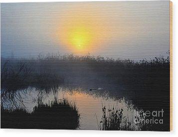 Beaver At Beaver Dam In Morning Wood Print by Dan Friend