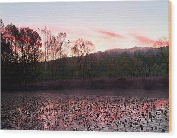 Beaver Marsh Wood Print by David Yunker