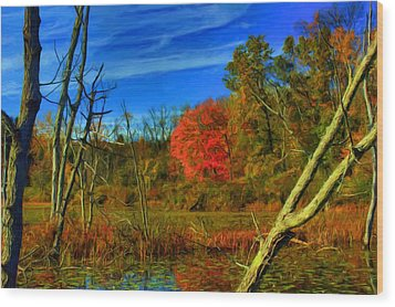 Beaver Marsh In October Wood Print