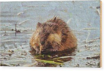 Beaver Portrait On Canvas Wood Print