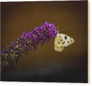 Wood Print featuring the photograph Beckers On Butterfly Bush Sparks Nevada by Janis Knight