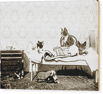 Wood Print featuring the photograph Bed Time For Kitty Cats Histrica Photo Circa 1900 by California Views Mr Pat Hathaway Archives