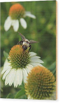 Bee 7 Wood Print by Reid Callaway