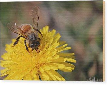 Bee And Dandelion Wood Print by Lorri Crossno