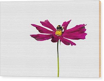 Bee At Work - Featured 3 Wood Print by Alexander Senin