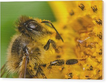 Bee At Work Wood Print
