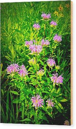 Bee Balm Of The Butterfly Gardens Of Wisconsin Wood Print by Carol Toepke