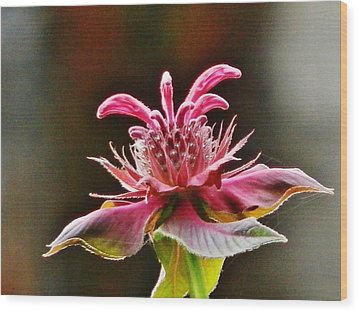 Wood Print featuring the photograph Bee Balm's Beauty by VLee Watson