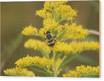 Wood Print featuring the photograph Bee Closeup by Paula Brown