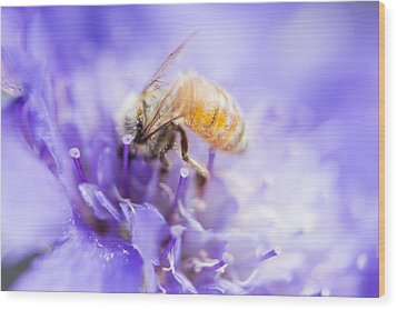 Bee Dream Wood Print by Caitlyn  Grasso