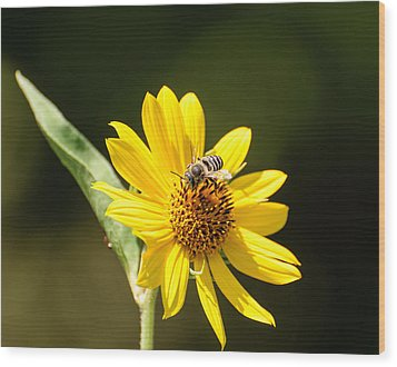 Bee Flower Wood Print