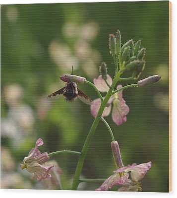 Wood Print featuring the photograph Pink Mustard Flower by Adria Trail