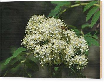 Bee Hovering Over Rowan Truss - Featured 3 Wood Print by Alexander Senin