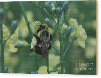 Bee Hugs Wood Print