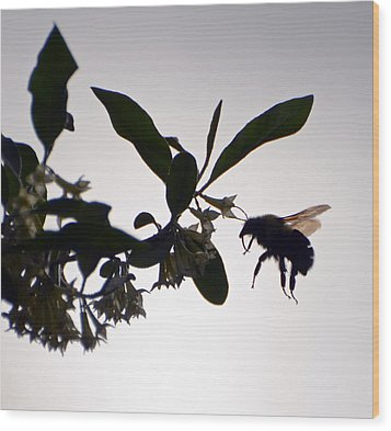 Wood Print featuring the photograph Bee In Flight  by Kerri Farley