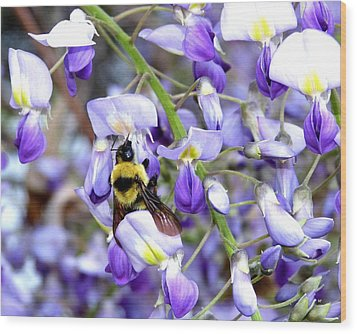 Bee In The Wisteria Wood Print by Will Borden