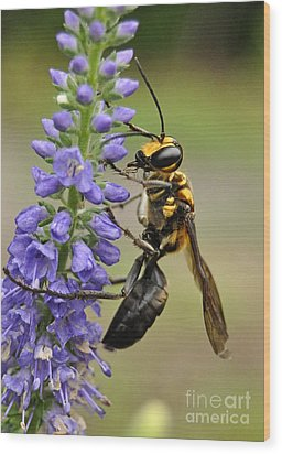 Bee Kind Wood Print by Kathy Baccari