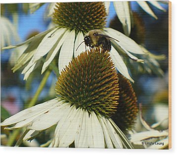 Wood Print featuring the photograph Bee On A Cone Flower by Lingfai Leung