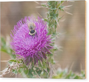 Bee On A Thistle Flower Wood Print