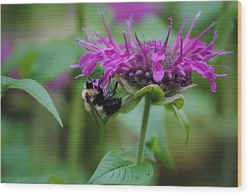 Bee On Bee Balm Wood Print