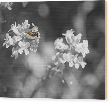 Bee On Black And White Flowers Wood Print