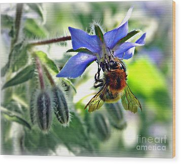 Wood Print featuring the photograph Bee On Borage by Morag Bates