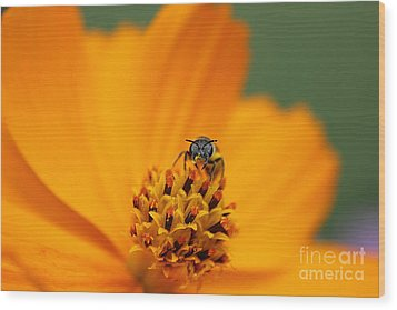 Wood Print featuring the photograph Bee On Cosmo by Lisa L Silva