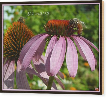Wood Print featuring the photograph Bee On Echinacea by Heidi Manly