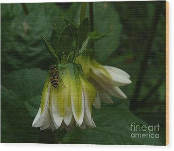 Wood Print featuring the photograph Bee On Flower by Jane Ford