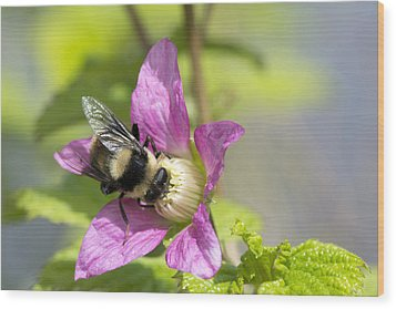 Bee On Flower Wood Print by Michele Wright