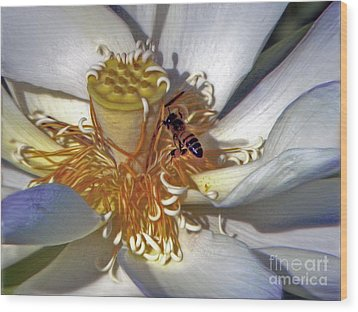 Bee On Lotus Wood Print