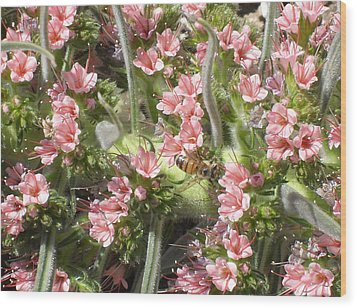 Bee On Pink Flowers Wood Print by Mark Barclay