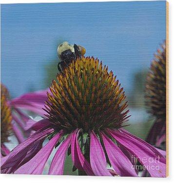 Bee On Purple Coneflowers Wood Print