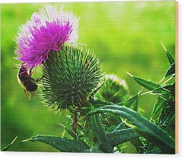 Bee On Thistle Wood Print by Joy Nichols