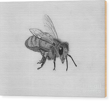 Bee Pencil Drawing Wood Print by Dan Julien