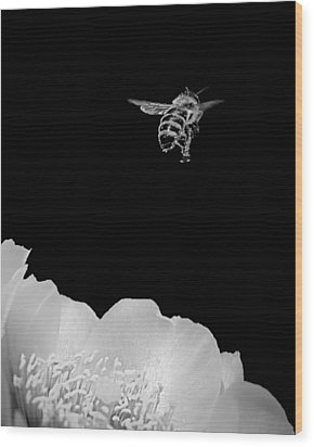 bee rising #2 B/W Wood Print