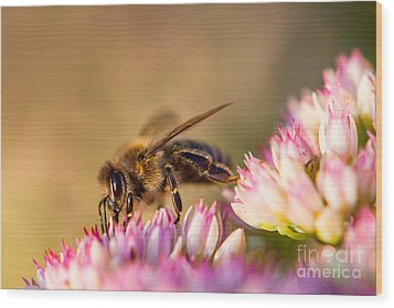 Bee Sitting On Flower Wood Print