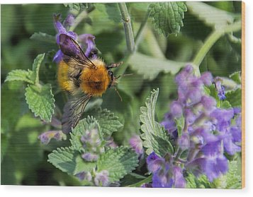 Wood Print featuring the photograph Bee Too by David Gleeson