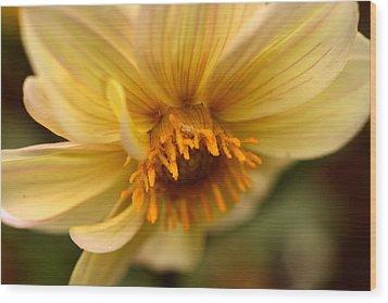 Bee Trap Wood Print by Wanda Brandon