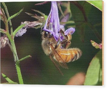 Bee With Flower Wood Print by Ron Roberts