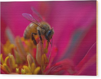 Bee Within Flower Wood Print by Sarah Crites