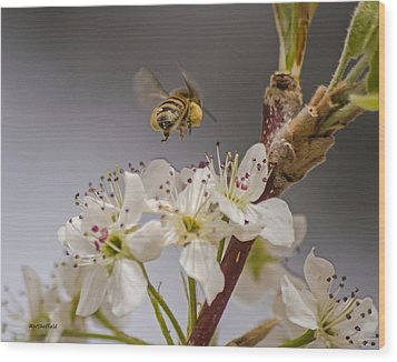 Bee Working The Bradford Pear 2 Wood Print by Allen Sheffield