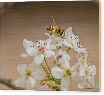 Bee Working The Bradford Pear 4 Wood Print by Allen Sheffield